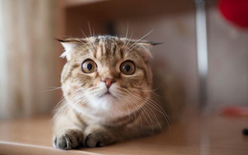 cat eyes f wallpaper