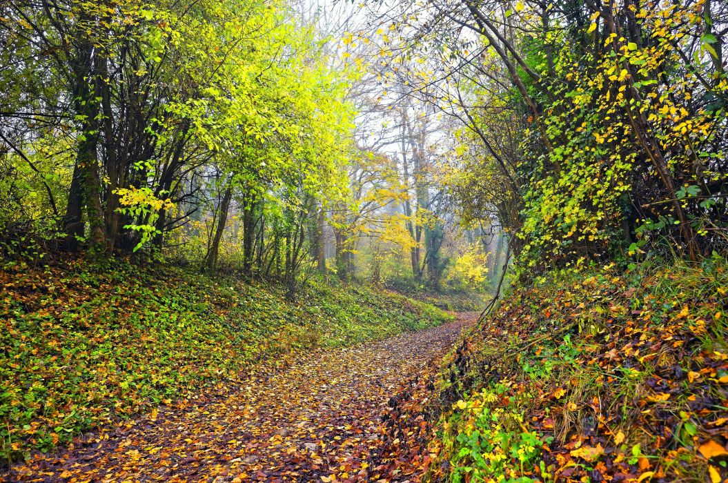 Seasons Autumn Forest Trail Foliage Nature wallpaper