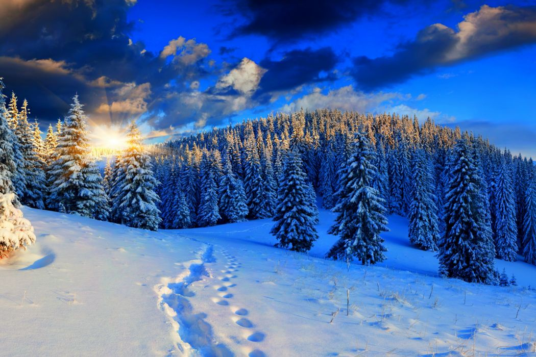 Scenery Seasons Winter Forest Sky Sunrise and sunset Snow Fir Nature mountains wallpaper