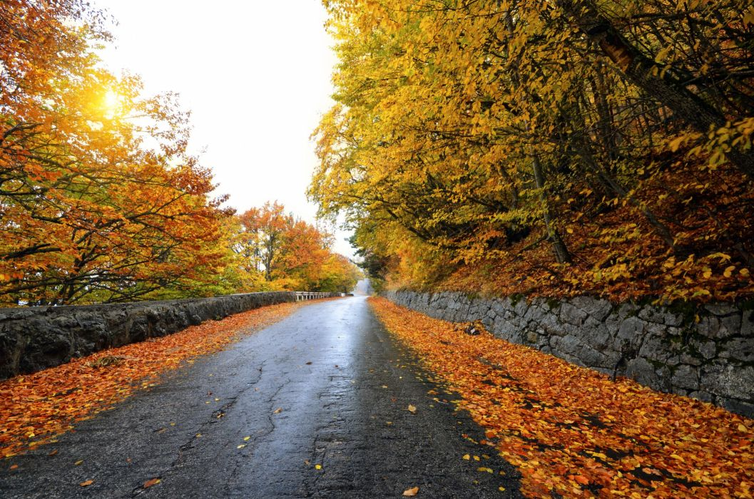 Seasons Autumn Road Foliage Nature forest fence wallpaper