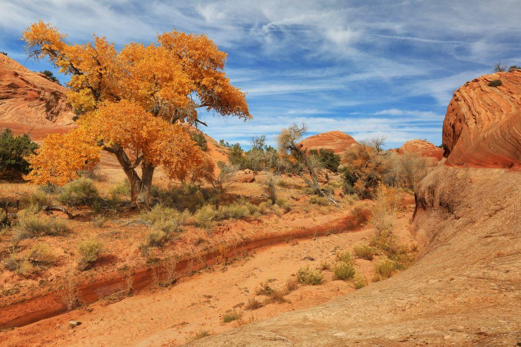 USA Pars Sky Utah Trees Sand Nature desert landscape wallpaper