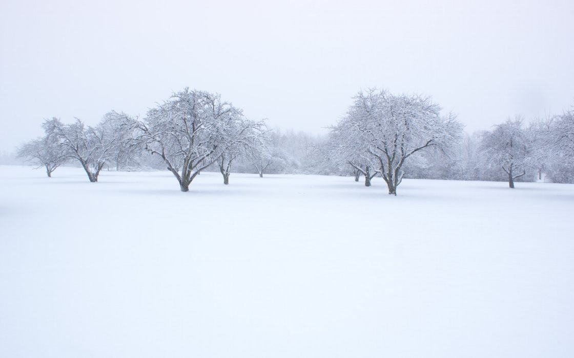 winter nature snow beautiful lovely landscape landscapes wallpaper