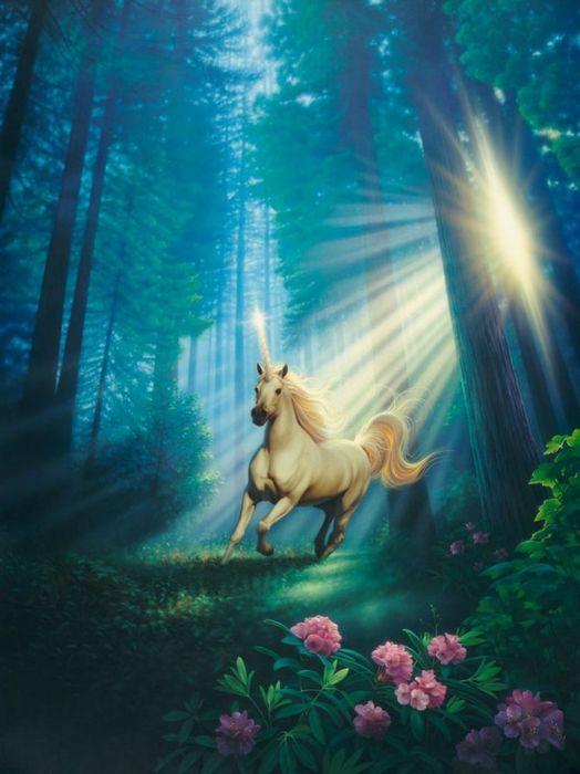 Unicorn fantasy forest flower beautiful sunlight wallpaper
