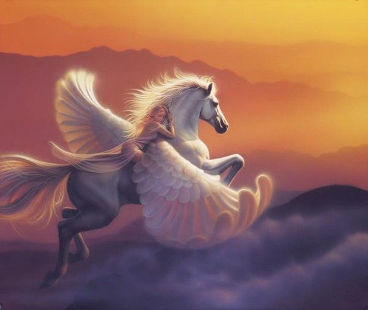 horse riding hd wallpapers