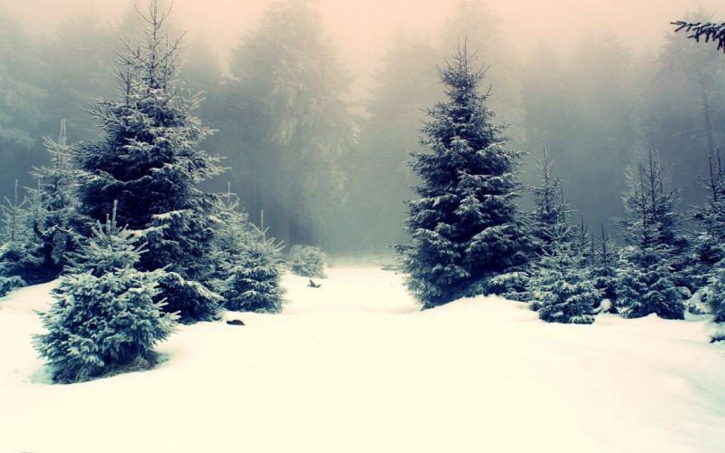 winter nature snow beautiful lovely landscape landscapes wallpaper