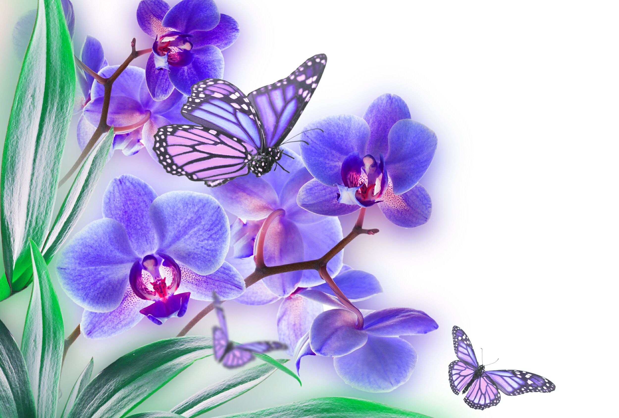 Orchid Wallpapers Flower Erfly Color Hd