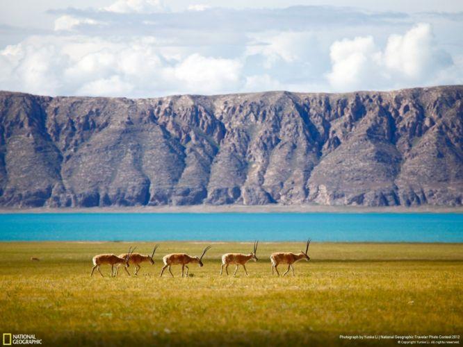National Geographic lake animal mountain wallpaper