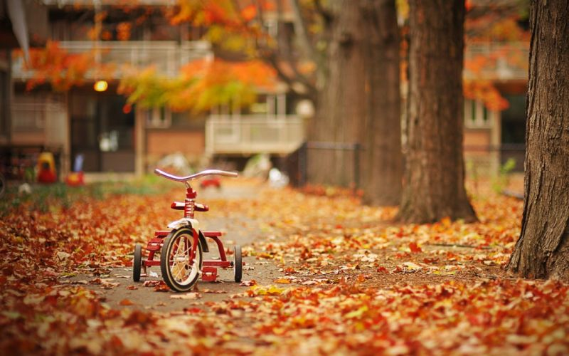 Autumnal tricycle wallpaper