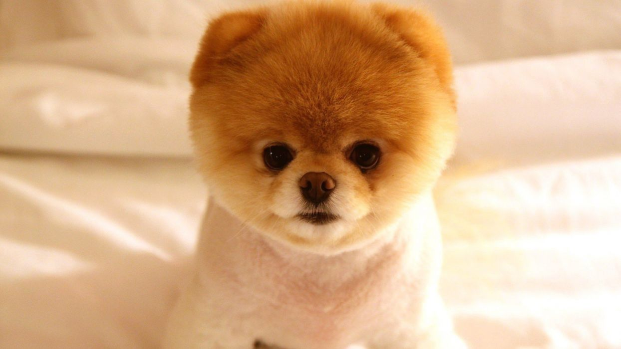 dogs baby animals wallpaper