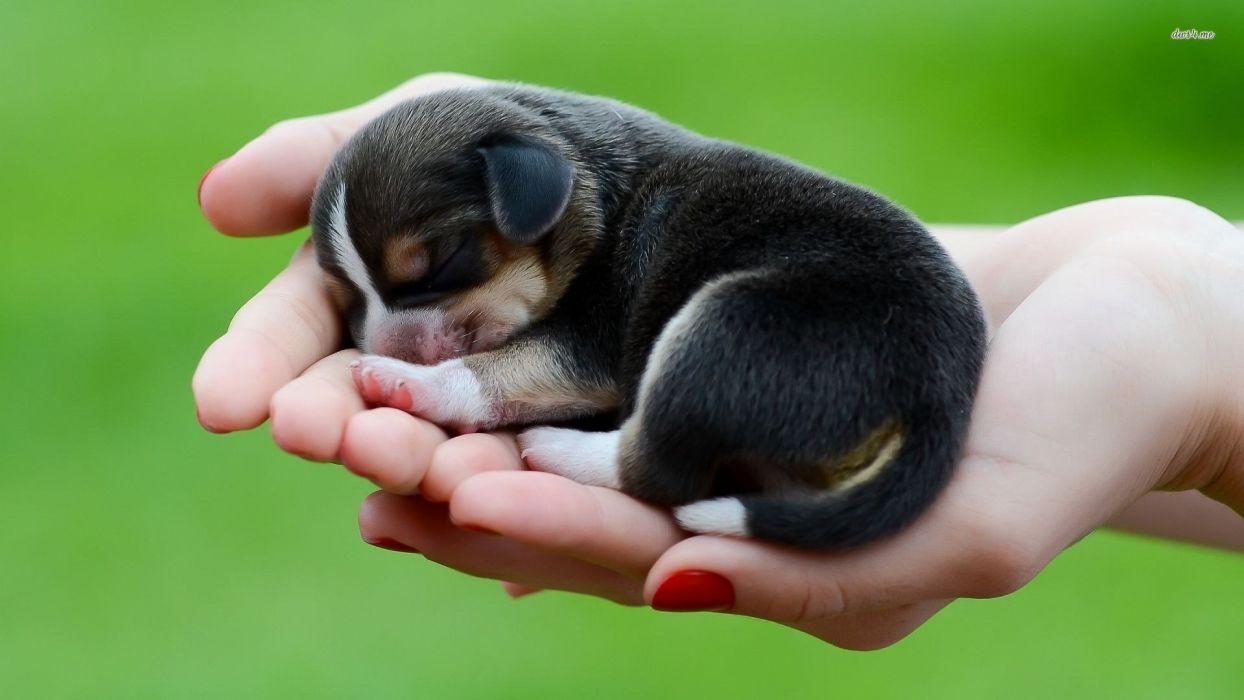 Puppy in hand Baby Animals wallpaper