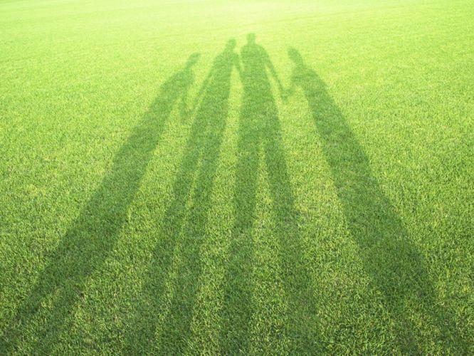 grass family shadow reflection wallpaper