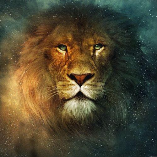 lion star animal wallpaper