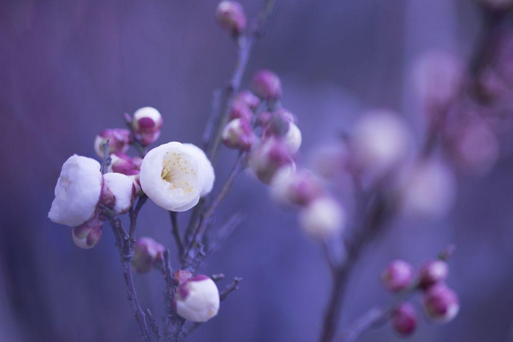 White pink Flowers Petals buds wallpaper