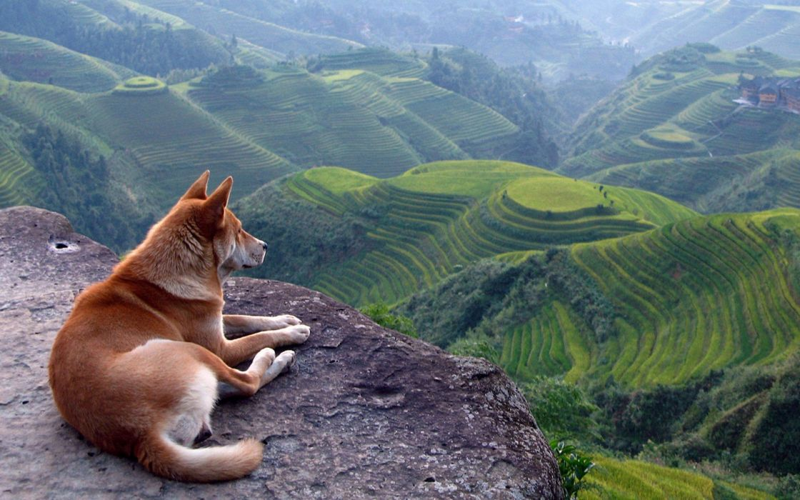 Dog in nature wallpaper