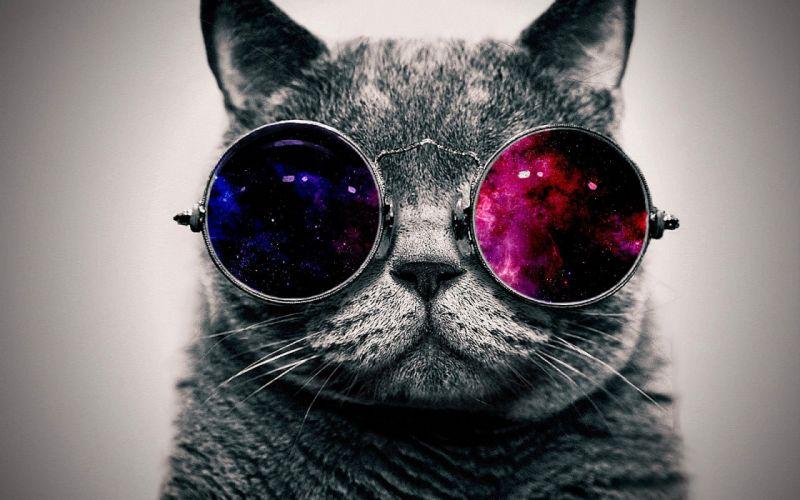 Cat glasses galaxy wallpaper