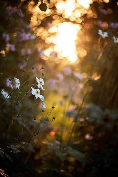 flower sunlight nature forest wallpaper