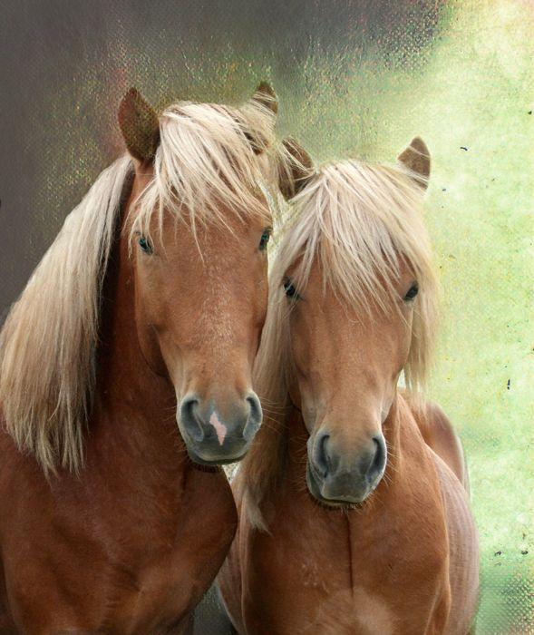 horses animal beauty wallpaper