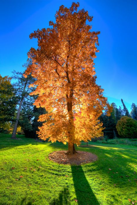 tree sunshine sunlight forest beauty wallpaper