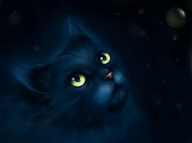 cat fantasy eyes kitty wallpaper