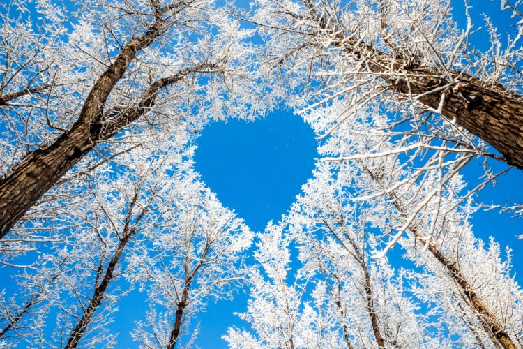 trees branches winter nature snow sky heart heart love wallpaper