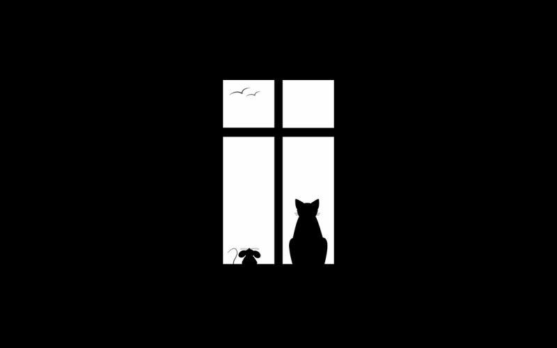 Friendship window cat black mouse bird wallpaper