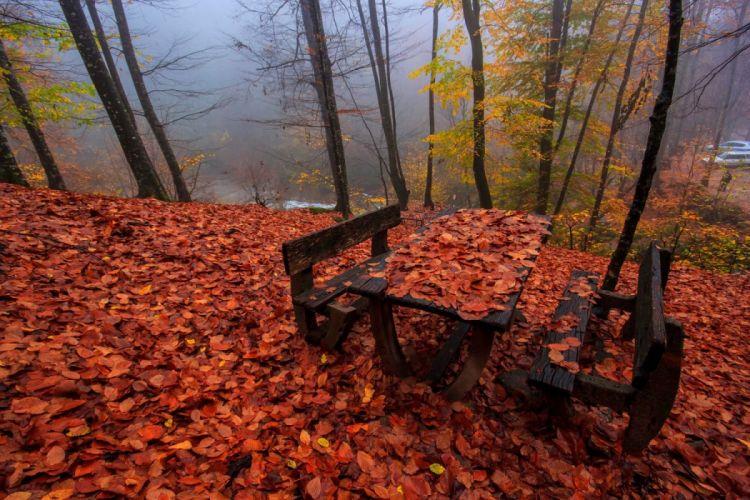 red forest turkey bursa tree fog autumn landscape wallpaper