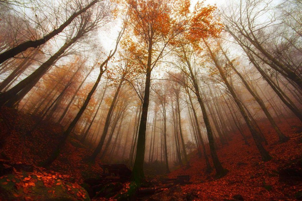 forest turkey bursa tree fog autumn landscape wallpaper