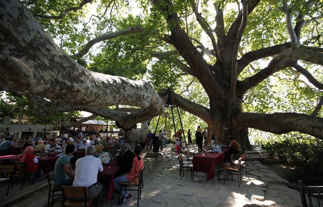 amazing tree nature peoples mood sunshine sunlight turkey bursa wallpaper