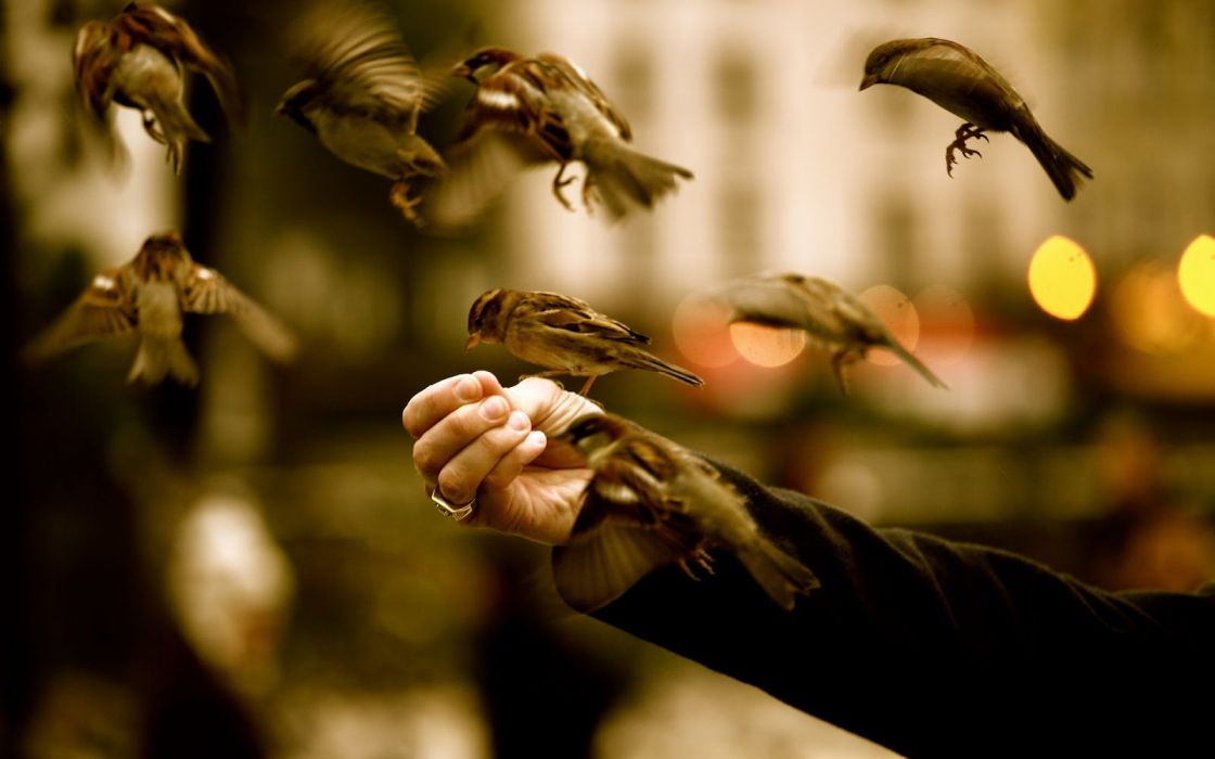 Sparrow bird mood animal hand wallpaper