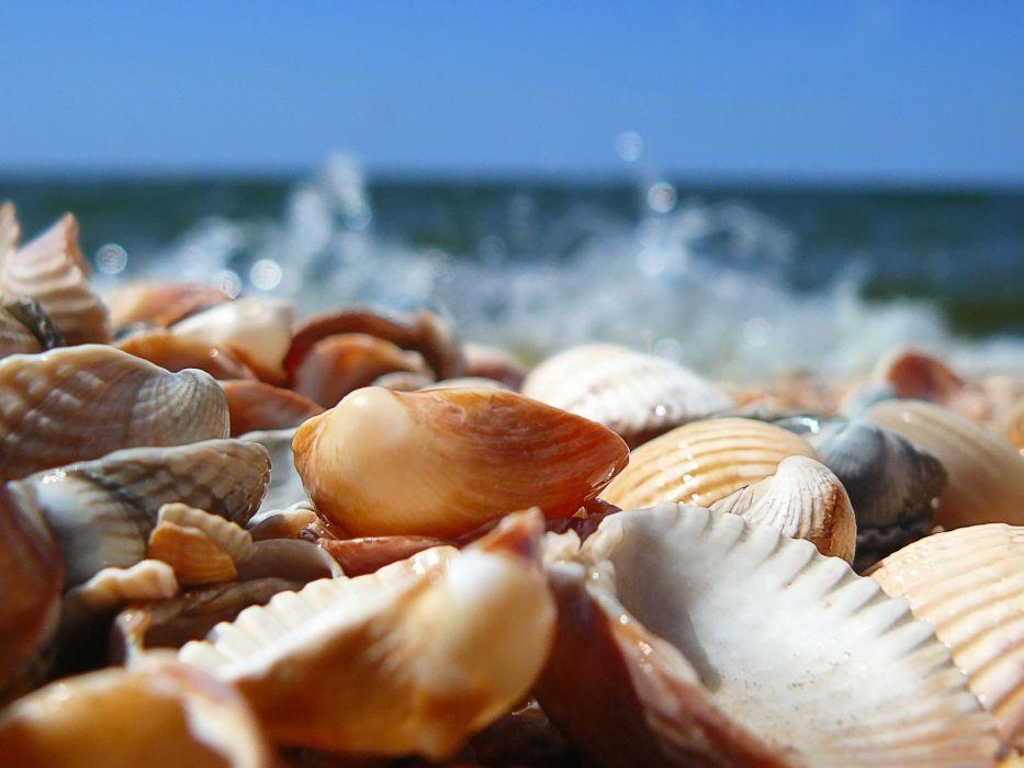 nature sea beach Shell wallpaper