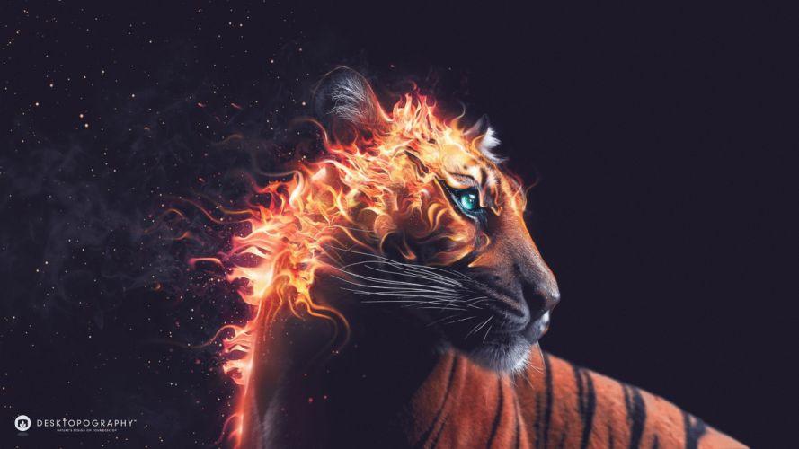 fire tiger fantasy blue eyes animal wallpaper