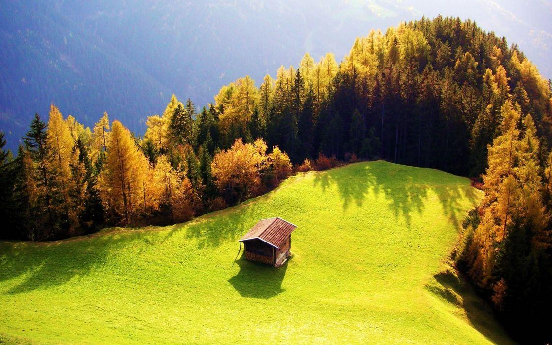 beautiful landscape grass tree forest house wallpaper