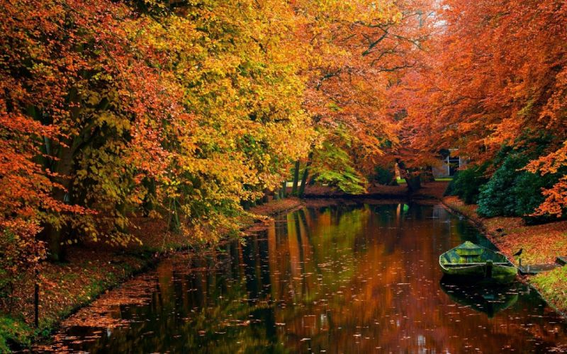 river tree autumn lake water forest landscape wallpaper