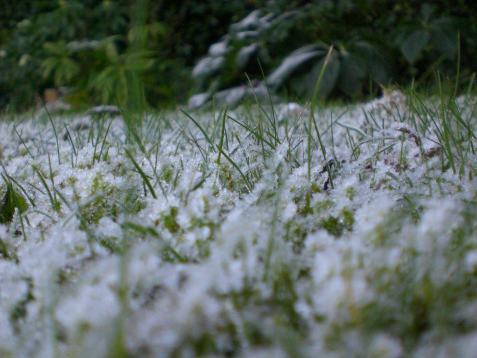 frost on grass 2 wallpaper