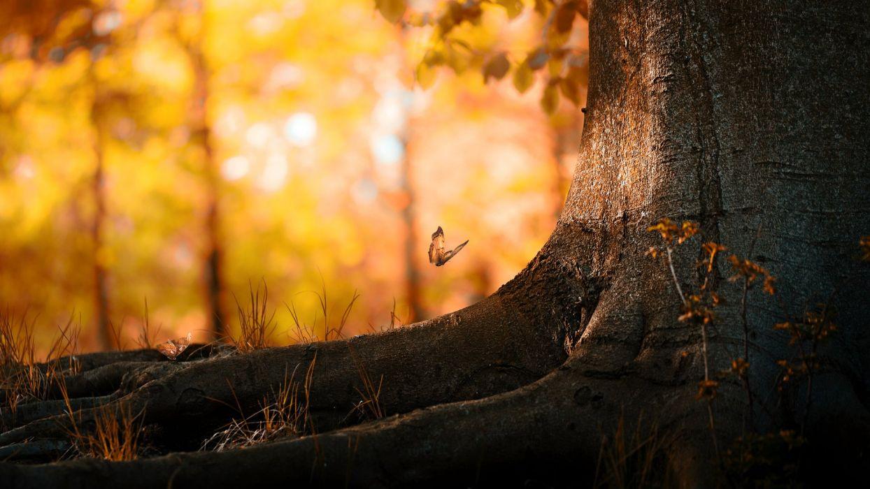 Nature Landscape Butterfly Wood wallpaper