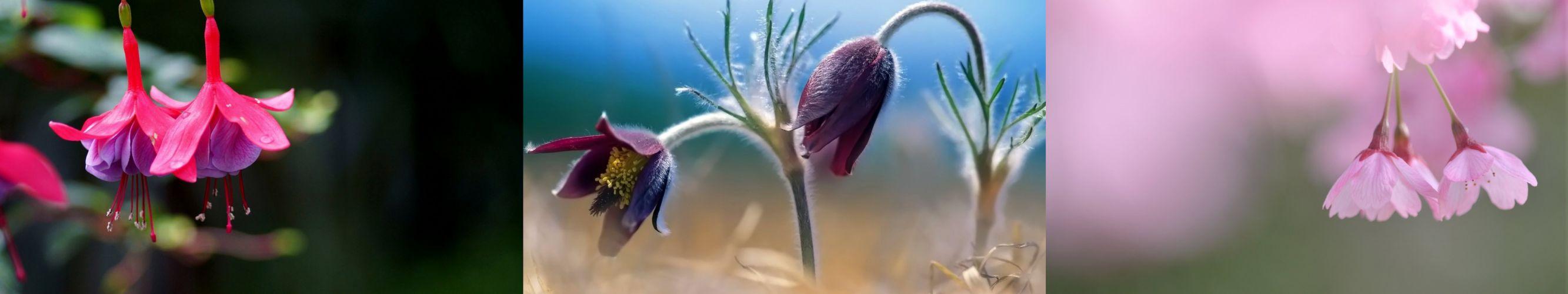 triple monitor multi multiple screen fleur flower plante nature plant color couleur wallpaper