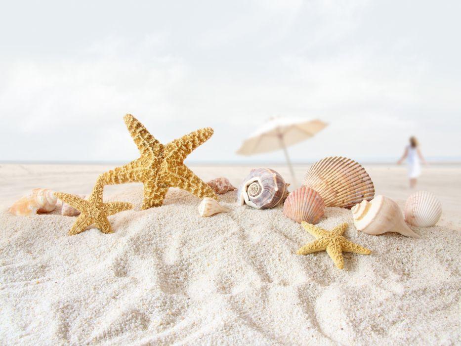 beach sand starfish seashells depth of field umbrellas wallpaper