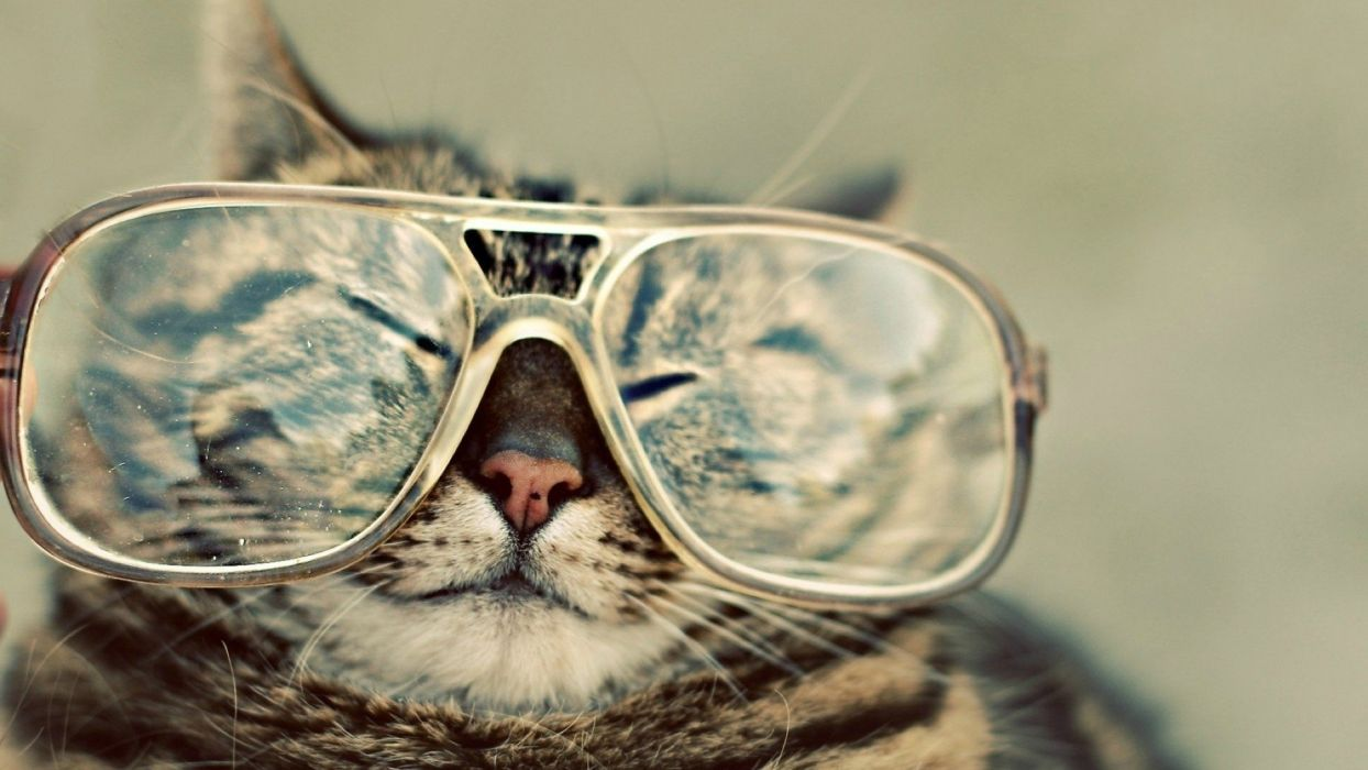 cats glasses hipster cute wallpaper
