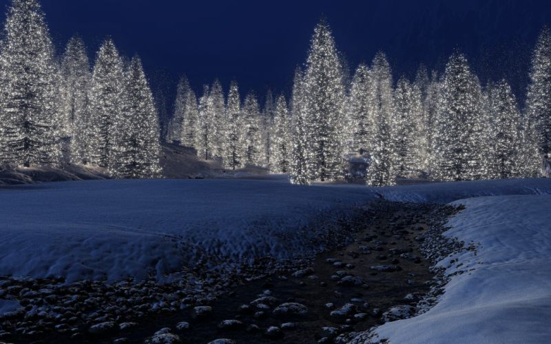 landscapes forest tree night wallpaper