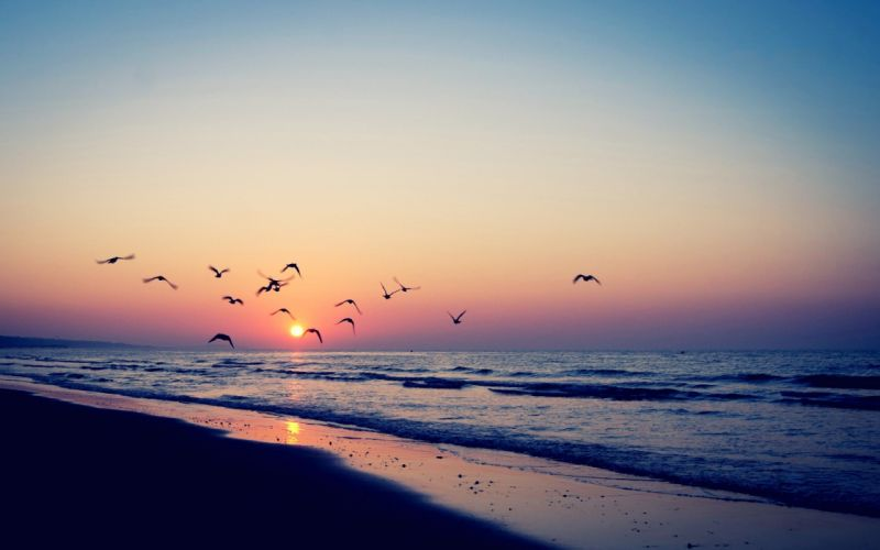 Sea Birds sunset sea beautiful mood wallpaper