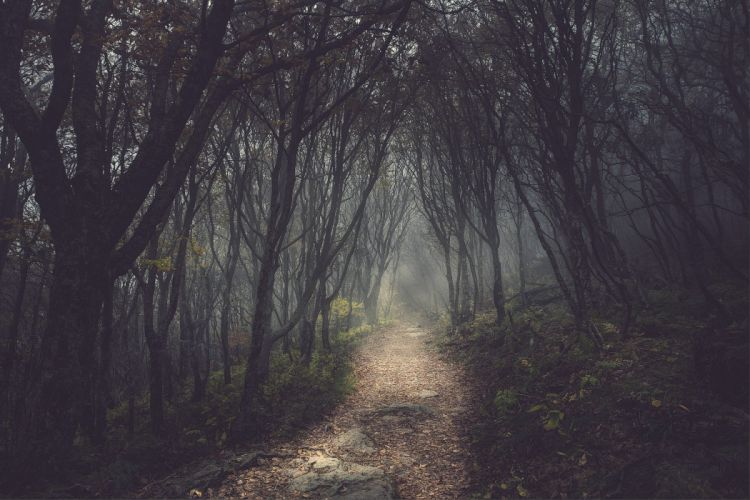 trees forests paths fog mist wallpaper