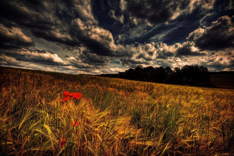 Field flower sky clouds landscape wallpaper