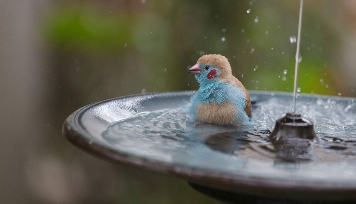 Birds Water Spray Animals drops bath wallpaper