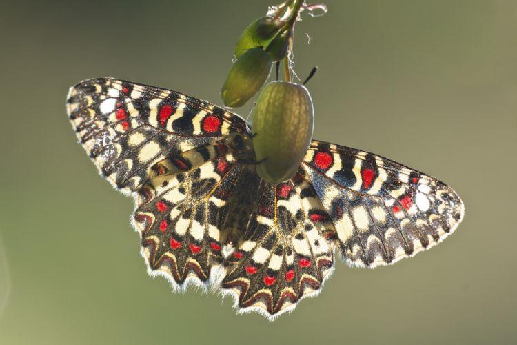 Butterflies Animals wings butterfly bokeh wallpaper