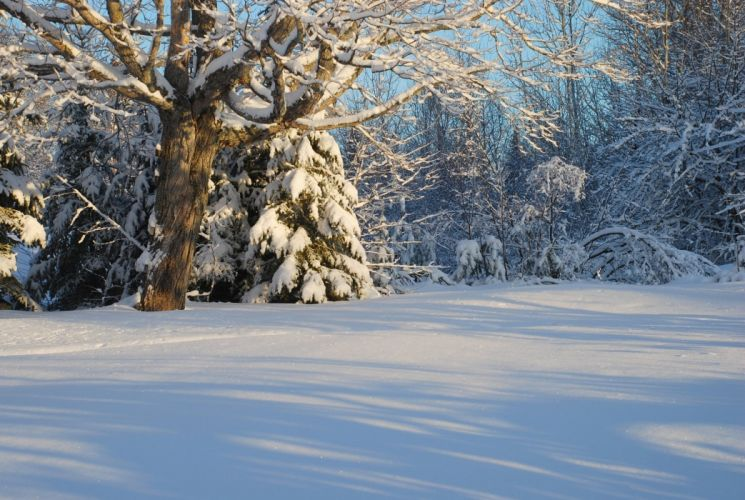 Canada winter snow forest trees wallpaper