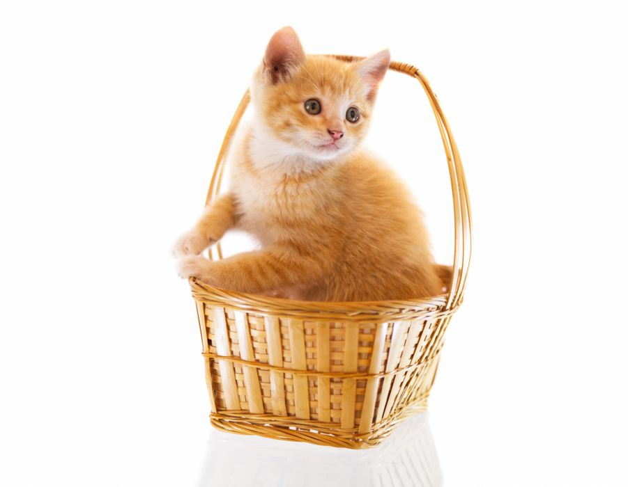 Cats Wicker basket Kitten Ginger color Animals baby wallpaper