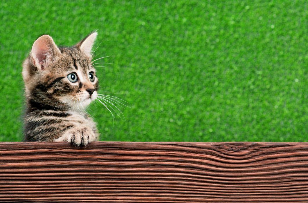 Cats Kitten Glance Animals baby cute wallpaper
