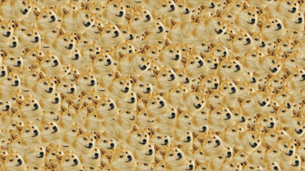 Dog Texture humor face bikeh collage funny comedy wallpaper