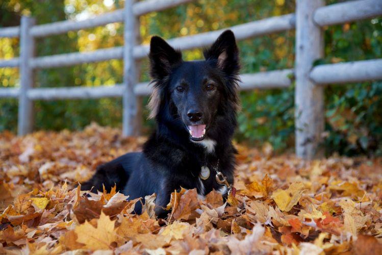 dog friend view autumn wallpaper