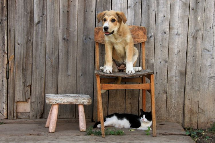 Dogs Puppy Chairs Animals baby cats cat wallpaper